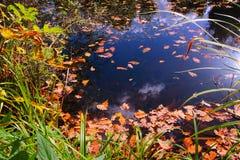 Kolorowi jesieni drzewa, staw w parku i Obraz Stock