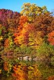 Kolorowi jesieni odbicia Zdjęcie Royalty Free