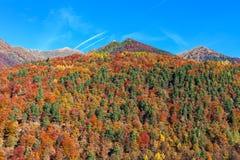 Kolorowi jesienni drzewa na górach w Szwajcaria Obrazy Stock