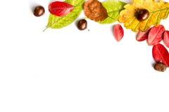 Kolorowi jesienni liście i dokrętki na bielu Fotografia Stock