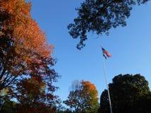 Kolorowi Klonowego drzewa liście w central park Obraz Stock