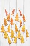 Kolorowi klonowi liście Obrazy Stock