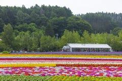 Kolorowi kwiatów pola Tomita gospodarstwo rolne, Furano, hokkaido Obrazy Royalty Free
