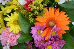 kolorowi kwiaty Obrazy Stock