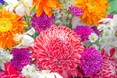 Kolorowi kwiaty Zdjęcia Royalty Free