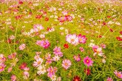 Kolorowi kwiaty 23 Obraz Royalty Free