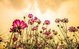 Kolorowi kwiaty 24 Zdjęcia Royalty Free