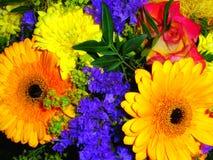 kolorowi kwiaty Zdjęcie Royalty Free