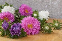 Kolorowi kwiaty - astery Zdjęcia Stock