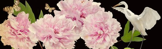 Kolorowi kwiaty i biała czapli granica obrazy stock