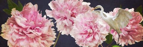 Kolorowi kwiaty i biała czapli granica Zdjęcia Royalty Free