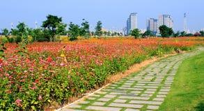 Kolorowi kwiaty i parki Zdjęcie Royalty Free