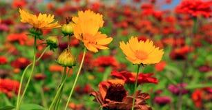 Kolorowi kwiaty i parki Obraz Royalty Free