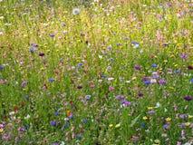Kolorowi kwiaty na łące - idylliczna atmosfera fotografia stock