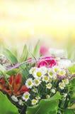 Kolorowi kwiaty na pogodnym tle Zdjęcia Royalty Free