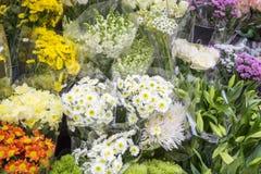 Kolorowi kwiaty na pokazie Obrazy Royalty Free