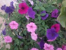 Kolorowi kwiaty park zdjęcia royalty free