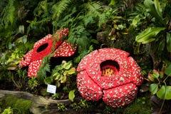 Kolorowi kwiaty tworzący z Lego fotografia royalty free