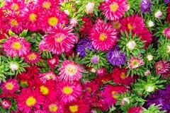 Kolorowi kwiaty w bukietach, odgórny widok Zdjęcia Stock