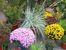 Kolorowi kwiaty w garnkach przy kwiatu sklepem Obraz Royalty Free