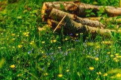Kolorowi kwiaty w haliźnie Zdjęcia Stock