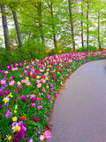 Kolorowi kwiaty w Keukenhof Zdjęcie Stock