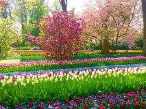 Kolorowi kwiaty w Keukenhof Zdjęcia Stock