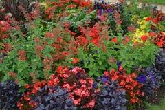 Kolorowi kwiaty w Luksemburg ogródzie, Paryż Zdjęcie Royalty Free