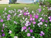 Kolorowi kwiaty w ogródzie obraz stock