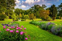 Kolorowi kwiaty w ogródzie przy druida wzgórza parkiem w Baltimore, M Obrazy Royalty Free