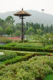 Kolorowi kwiaty w pięknym natura parku, Tajlandia Obraz Stock