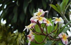 Kolorowi kwiaty z kroplami woda po deszczu Fotografia Stock