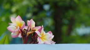 Kolorowi kwiaty z kroplami woda po deszczu Obraz Stock