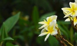 Kolorowi kwiaty z kroplami woda po deszczu Obrazy Royalty Free