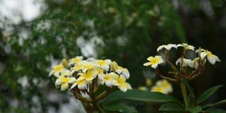 Kolorowi kwiaty z kroplami woda po deszczu Zdjęcia Royalty Free