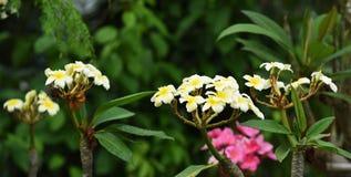 Kolorowi kwiaty z kroplami woda po deszczu Zdjęcie Royalty Free