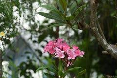 Kolorowi kwiaty z kroplami woda po deszczu Zdjęcie Stock