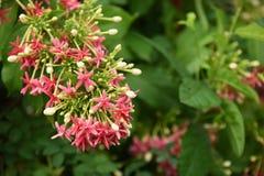 Kolorowi kwiaty z kroplami woda po deszczu Zdjęcia Stock