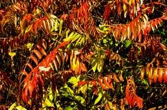 Kolorowi liście jesień Obrazy Stock
