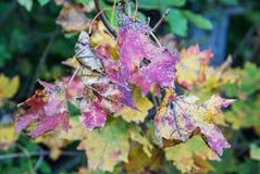 Kolorowi liście na jesieni drzewie, piękno filtr Fotografia Stock