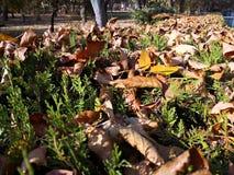 Kolorowi liście na ziemi - jesień w lesie zdjęcia stock