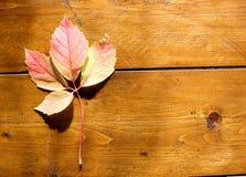 Kolorowi liście nad brąz drewnianymi deskami, tło skład obraz stock