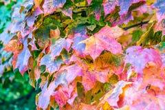 Kolorowi liście pokazują początek jesień zdjęcie stock