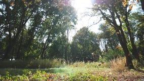 Kolorowi liście spada w pustym lesie przy wczesną jesienią na słonecznym dniu Ciepłych sunbeams pouczający zielony ulistnienie dr zdjęcie wideo