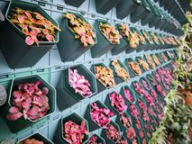 Kolorowi liście stawiają dalej ścianę obrazy stock