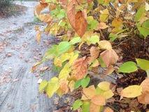 Kolorowi liście w jesień lesie Zdjęcie Stock
