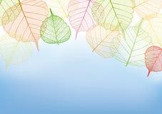 Kolorowi liście z kopii przestrzenią Fotografia Royalty Free