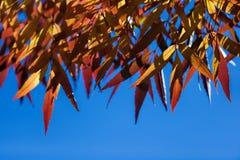 Kolorowi liście Fotografia Stock