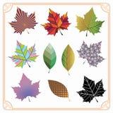 Kolorowi liście klonowi royalty ilustracja
