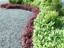 Kolorowi liście w ogródzie Obrazy Royalty Free